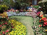 Carnival Of Flowers In Toowoomba