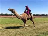 Forbes Camel Races at Easter